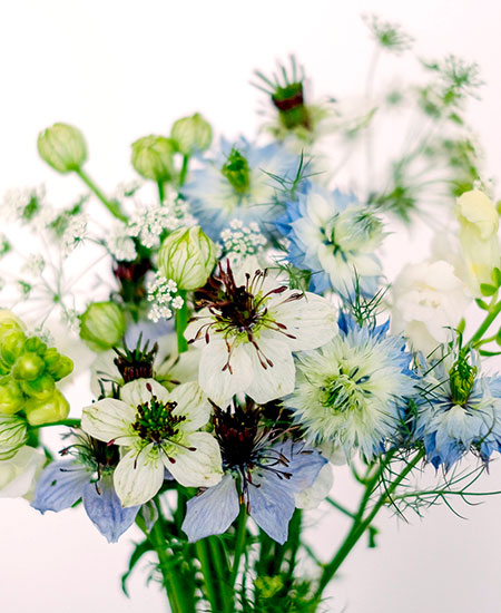 WILD BOUQUET NIGELLA COLLECTION