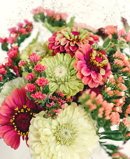 WILD BOUQUET ZINNA COLLECTION